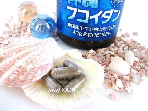 Viên uống tảo Fucoidan Okinawa phòng chống ung thư Nhật Bản 7