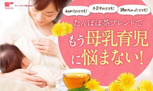 Trà bồ công anh Tanpopo Tea YAMAMOTO Nhật bản 5