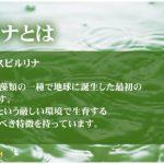Các loại tảo Nhật Bản được ưa chuộng Nhất