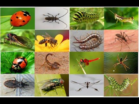 Các loại thuốc diệt chuột và côn trùng của Nhật tốt nhất 1