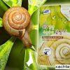Mặt nạ ốc sên Hàn quốc Fresh Snail 3W Clinic