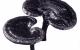 Các loại nấm linh chi và công dụng 7