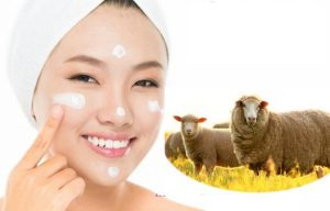 Nhau thai cừu được sử dụng như một chất bổ cho cơ thể