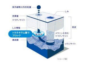 Thành phần chính của kem trị nám Transino Whitening Essence II